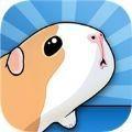 阳光豚鼠养殖场app下载_阳光豚鼠养殖场app最新版免费下载