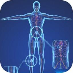 三维模型体谱app下载_三维模型体谱app最新版免费下载